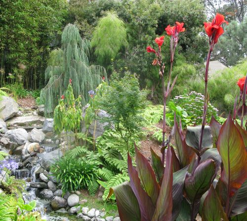 Canna & water feature