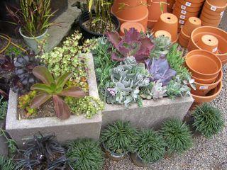 Green succulent display