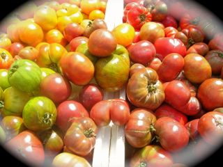 Farmers market heirloom tomatoes_2