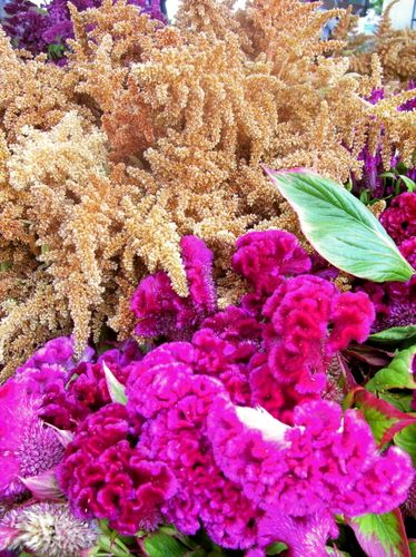 Farmers market amaranth flowers