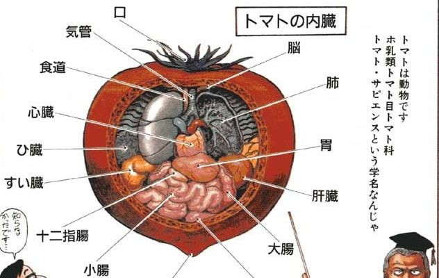 Anatomical-tomato