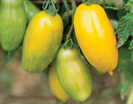 Banana-legs-tomato-ABFOOD0905-de