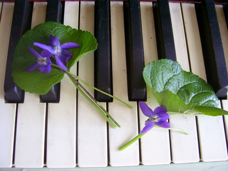 Violets on keyboard