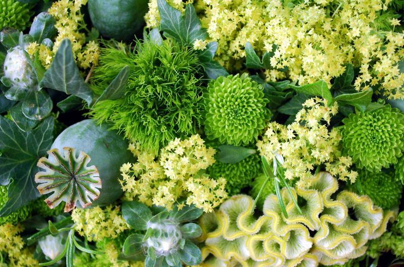 Dreamstime green flowers_2