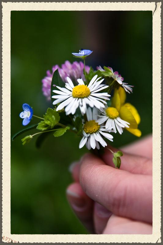 Nosegay wildflowers 2