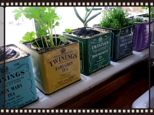 Herbs in tea connisters