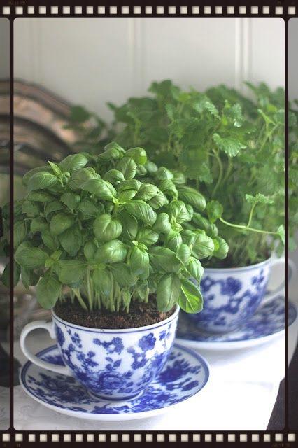Herbs in teacups